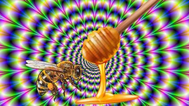 Hallucinogenichoney_FeaturedImage720x410-640x360